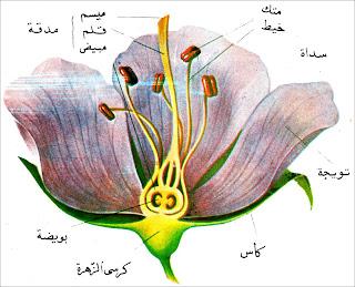 1 - بحث حول و مذكرات التكاثر عند النبات