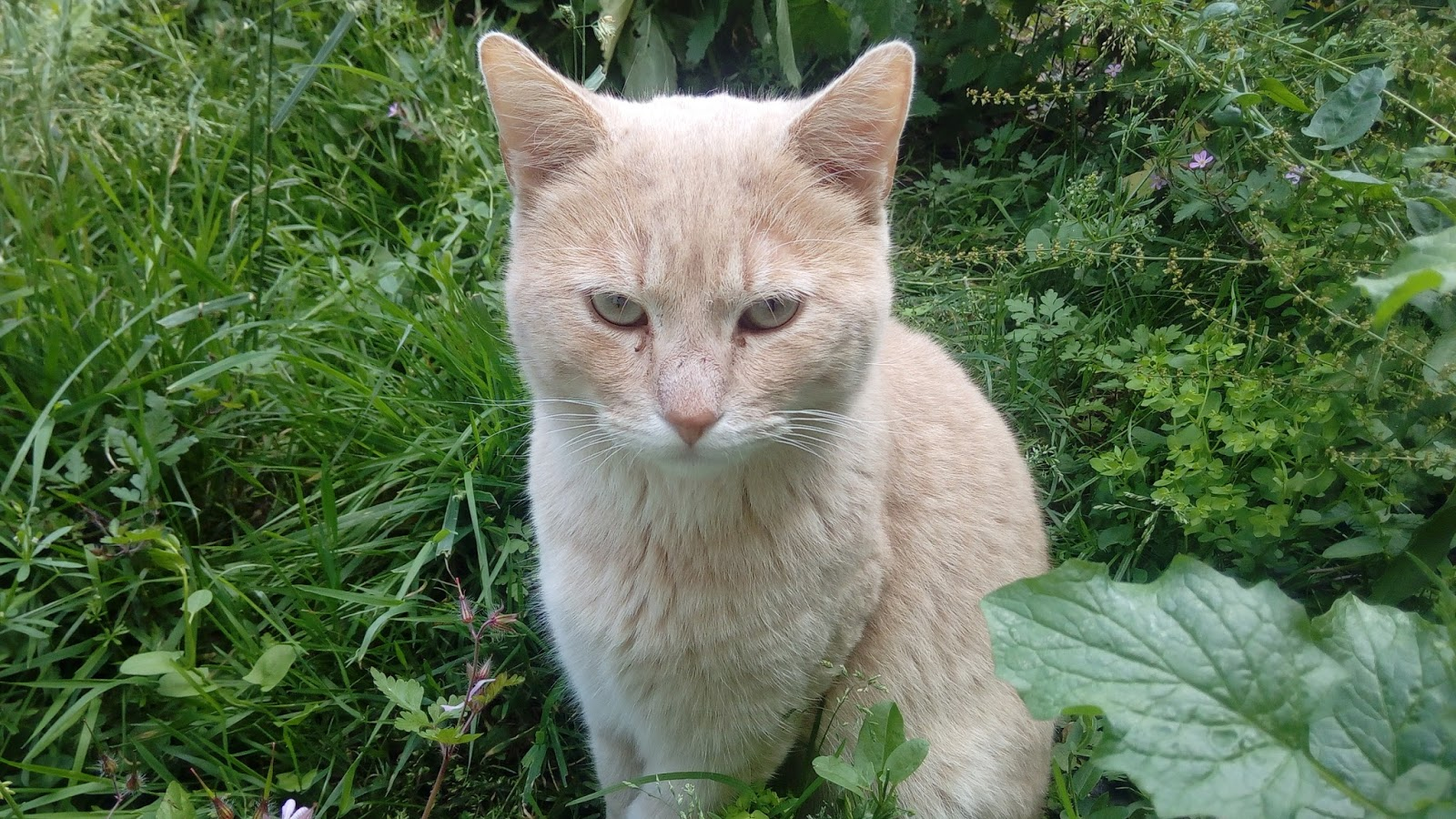 Chat Seul Appartement