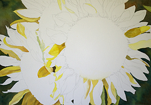 Sunflowers full Sheet Watercolor Painting Update 2