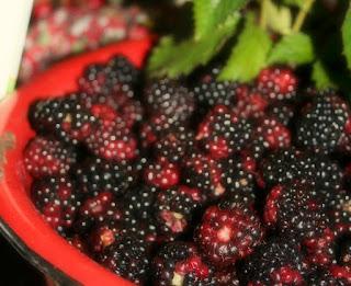 http://quakerhomecottage.blogspot.com.au/2016/07/beautiful-blackberries-sweet-neighbors.html