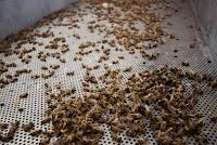 http://juanpuchefernandez.blogspot.com/2016/04/denuncia-las-abejas-mueren-envenenadas.html