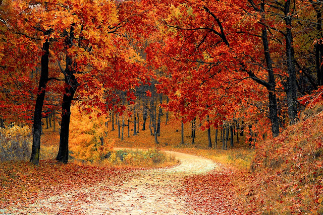 fall scene, fall leaves, fall road
