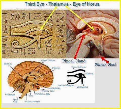 glándula pineal y cuerpos energéticos, chakras y glándula pineal, activación de chakras y akasha, cuerpos energéticos y astrología, sonidos primales y glándula pineal