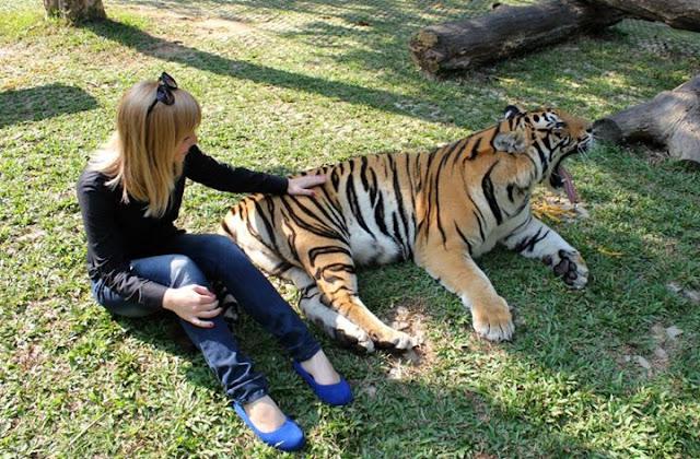 Adrian Fleur tiger