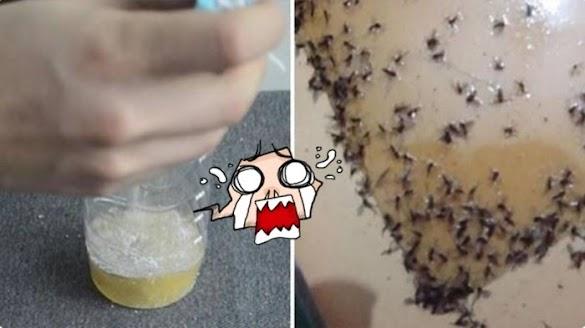 Taruh Cairan Ini di Sudut Ruangan, Dijamin Nyamuk Mati Seketika, Begini Cara Membuatnya!