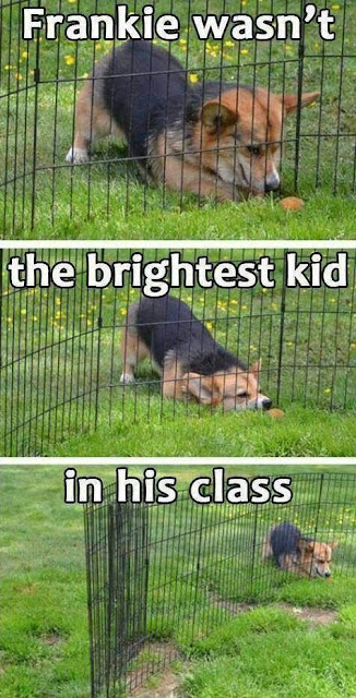Sadly, he wasn't the brightest kid in his class
