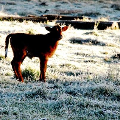 Neve nos Campos de Erechim