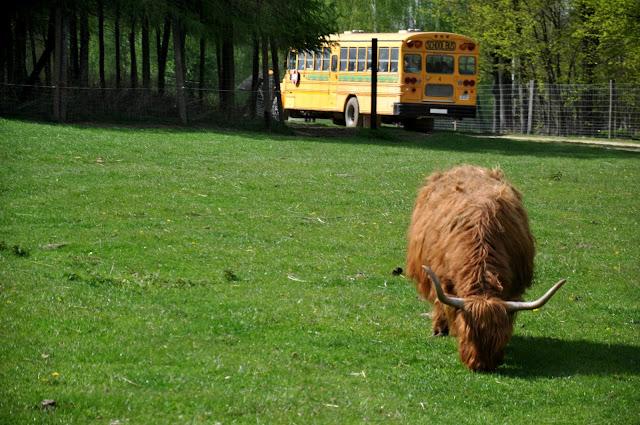 jurapark, bałtów, zwierzyniec, schoolbus