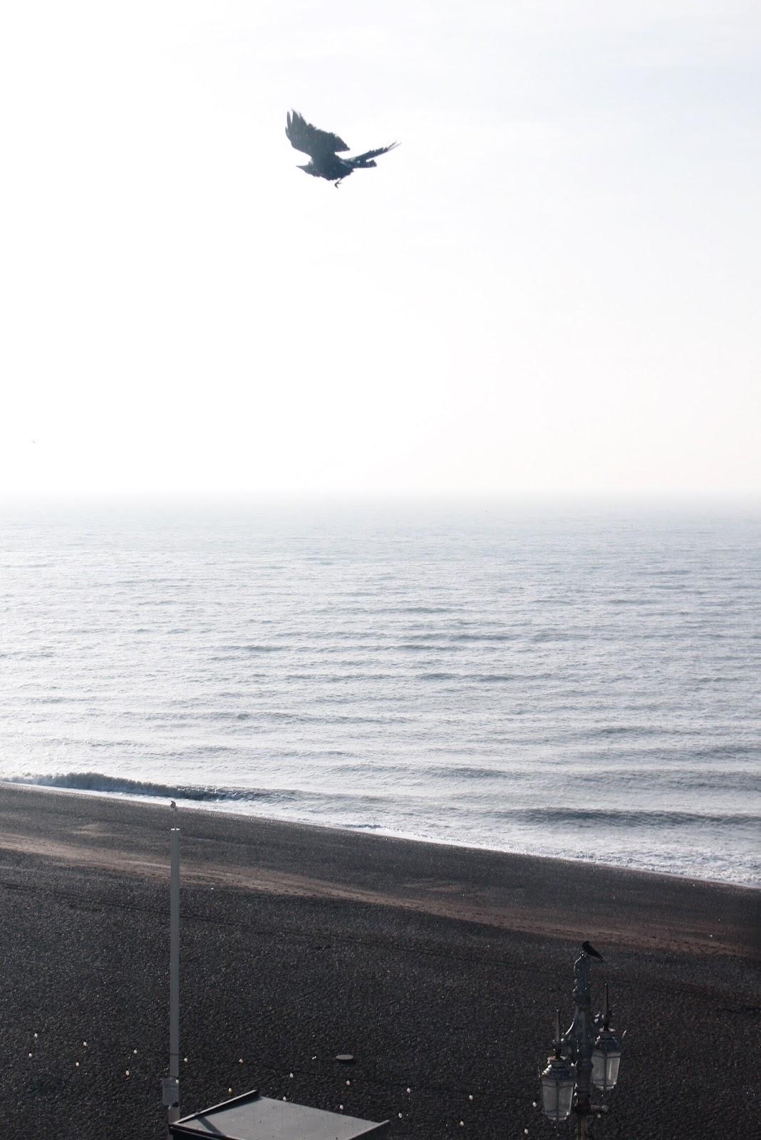 Seagulls Flying Around Brighton Seafront