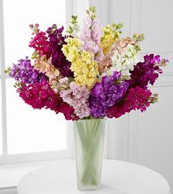 ازهار عطرية زهرة السهم stock flowers fragrance