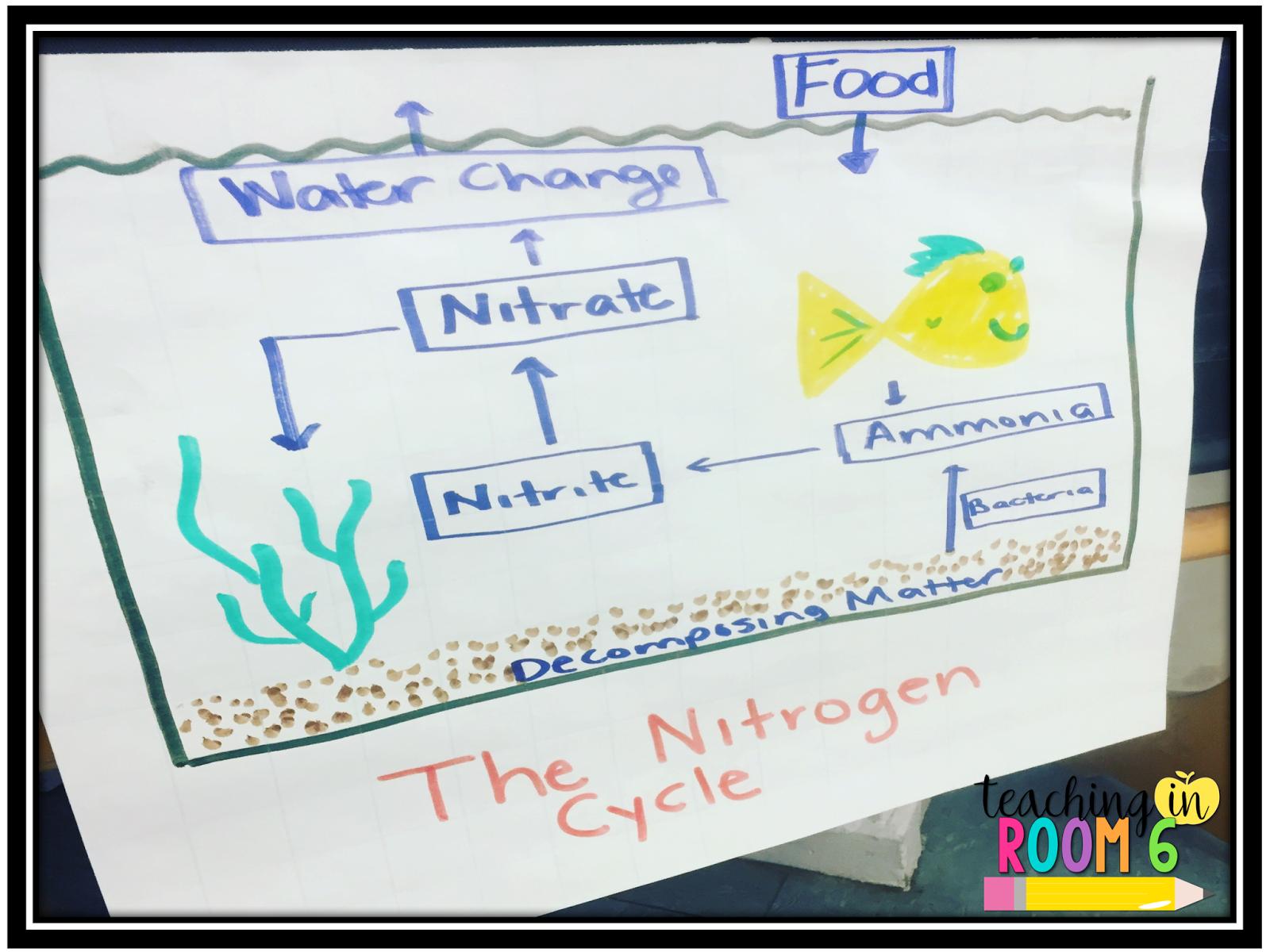 An Aquarium In My Fifth Grade Classroom