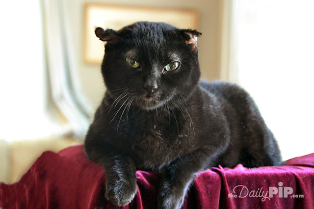 Rosie shares her rescue story and how her ears were frost bitten in Black Cats Tell All