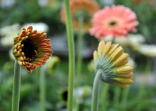 See Me Flower