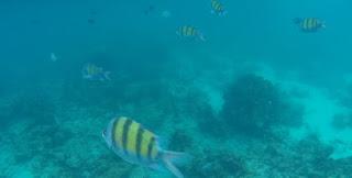 Snorkel en Koh Phi Phi Leh, Maya Bay.