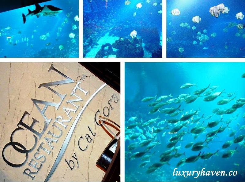 resort world sentosa cat cora ocean restaurant review