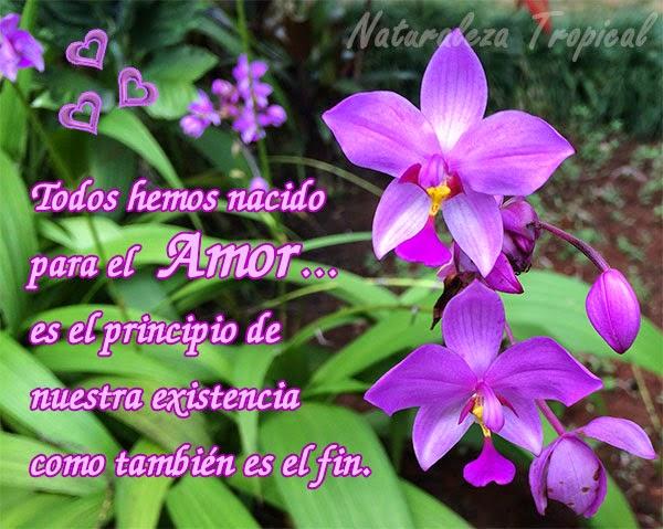 postal de amor con flor orquidea