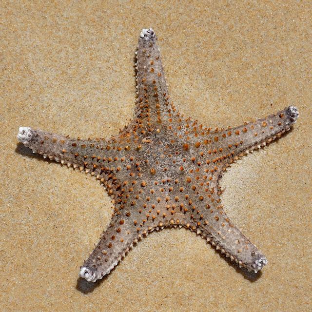 Seestern Symbol Moreton Island Strand