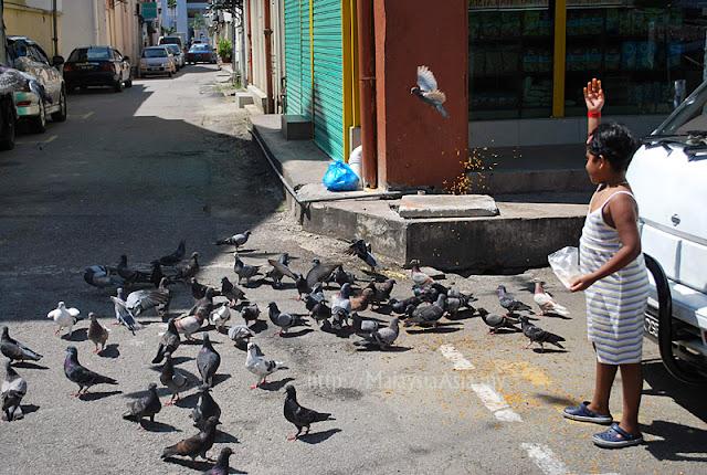 Klang Pigeons