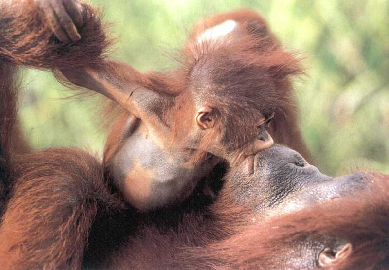 Cute Pair Wallpapers Animals Zoo Park Animal Love Animals Kissing Photos And