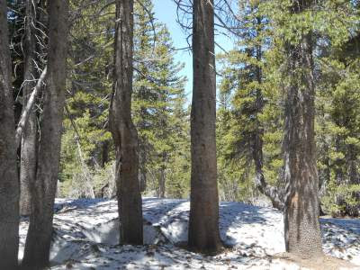 pine trees, snow, mountains, using your intuition, spiritual intuition, spiritual awakening