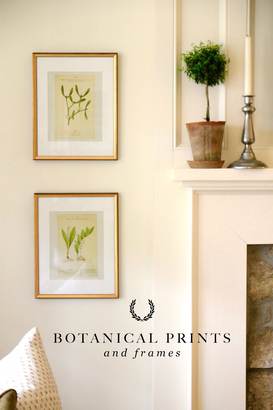Botanical Prints & Frames