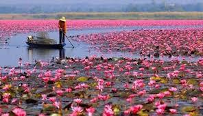 Danau Lotus