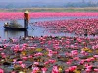Berwisata di Danau Lotus Terbesar Kedua di Dunia Juga