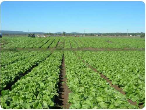 Limites Máximos de Resíduos de Agrotóxicos em produtos vegetais in natura