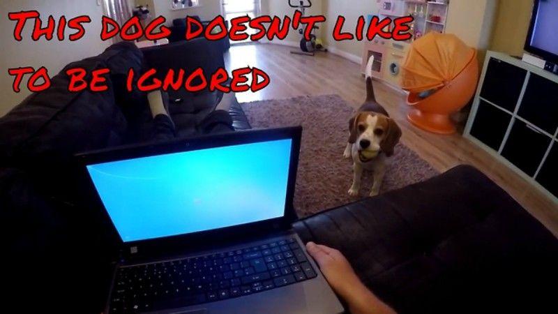 Σε αυτό το σκυλάκι δεν του αρέσει να μην του δίνουν σημασία.....(βίντεο)
