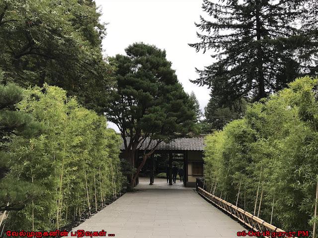 Japanese Natural Garden Portland