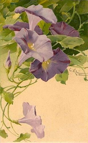 Художница Катарина Кляйн (Catharina Klein, 1861 — 1929) —  Цветы