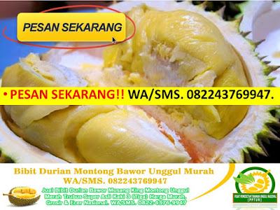 https://api.whatsapp.com/send?phone=6282243769947&text=Hallo,%20Saya%20mau%20info%20lengkap%20bibit%20durian