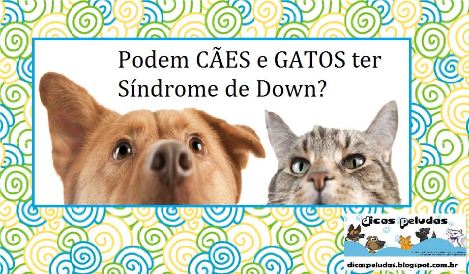 Quando o dono se depara com um animal com características tanto físicas  como comportamentais que remetem a síndrome de Down em humanos d97bb2fb382