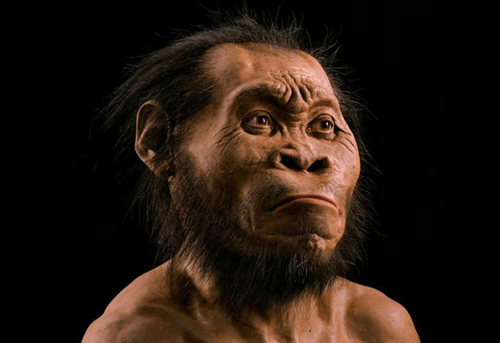 Homo Naledi A Look At Ancient Mans First Case Of Thinning Hair And Where Balding Came From