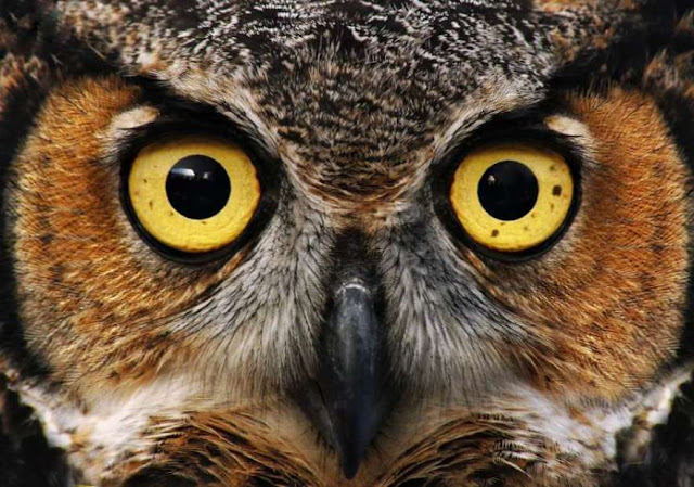 Owl Interesting Facts - Owl facts - Owl In Hindi
