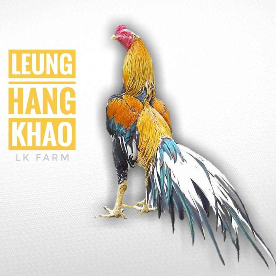 8000+ Gambar Ayam Ratu Lhk  Paling Keren