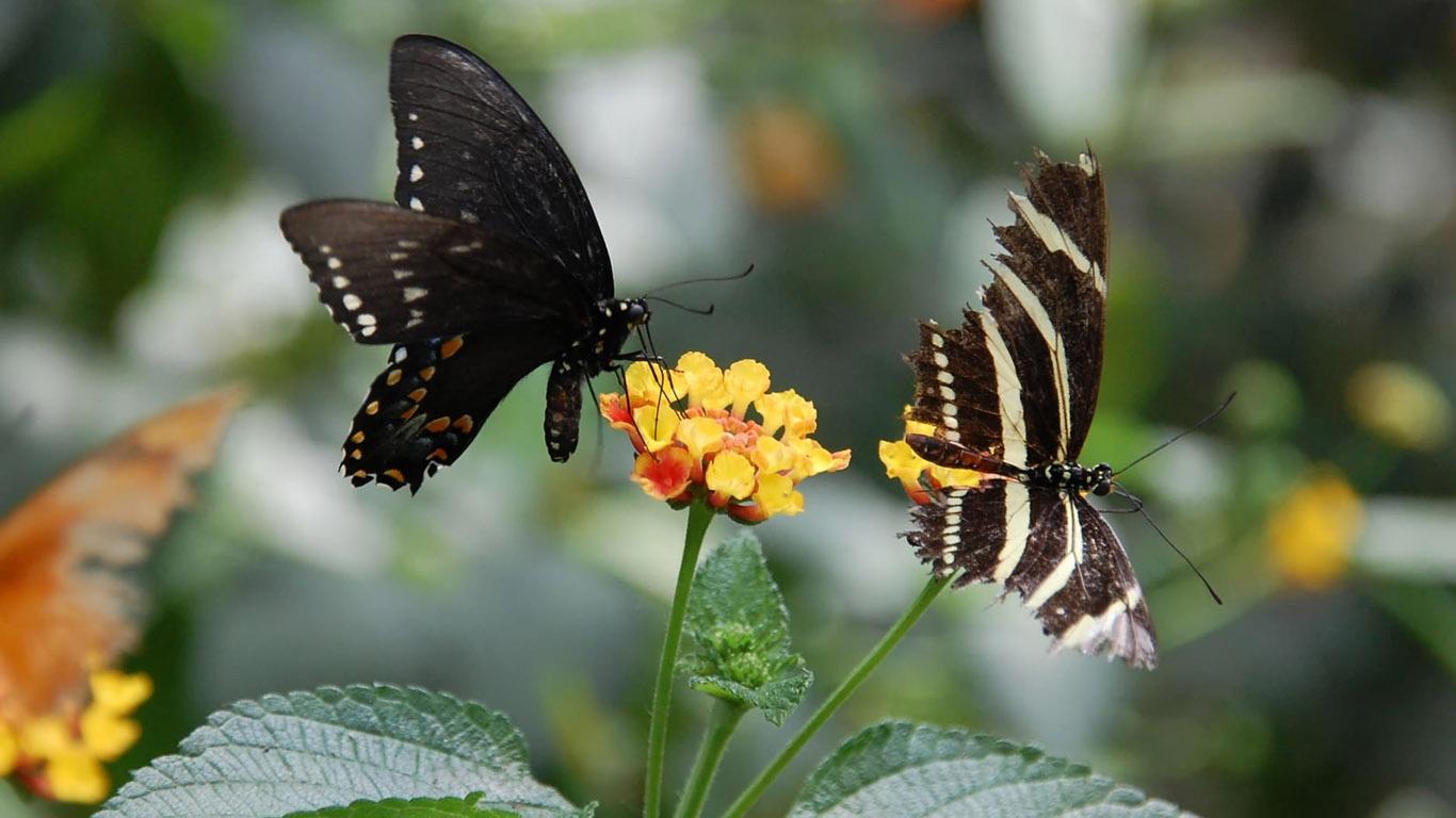 15 hermosas fotos en hd de mariposas y camellos y mas