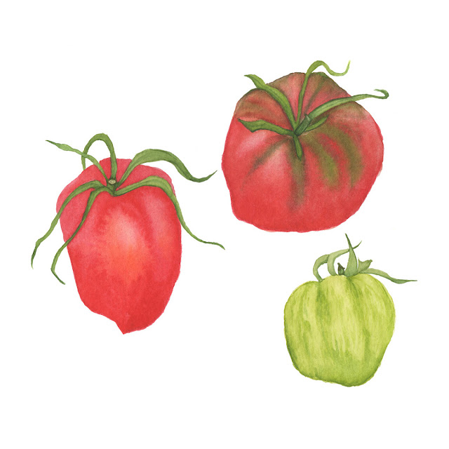 heirloom tomatoes, watercolor paintings, watercolor tomatoes, Anne Butera, My Giant Strawberry