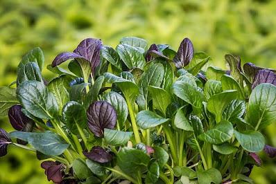 spinach,bayam,vegetables,manfaat bayam