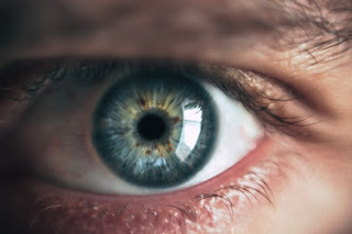 bacteria on your eyes coordinate with your immune system