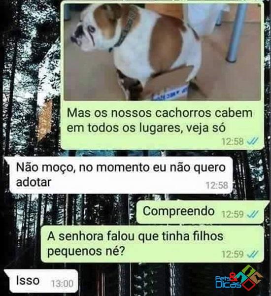 Conversa de adoção de um cão no whats