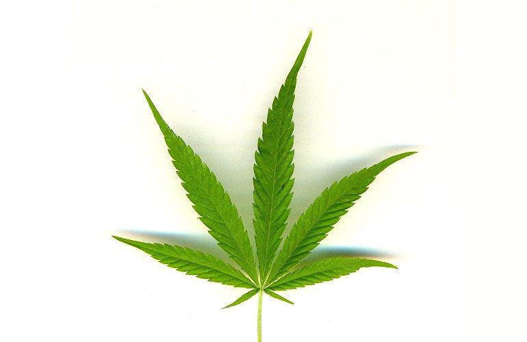 Beneficios Y Perjuicios De La Marihuana