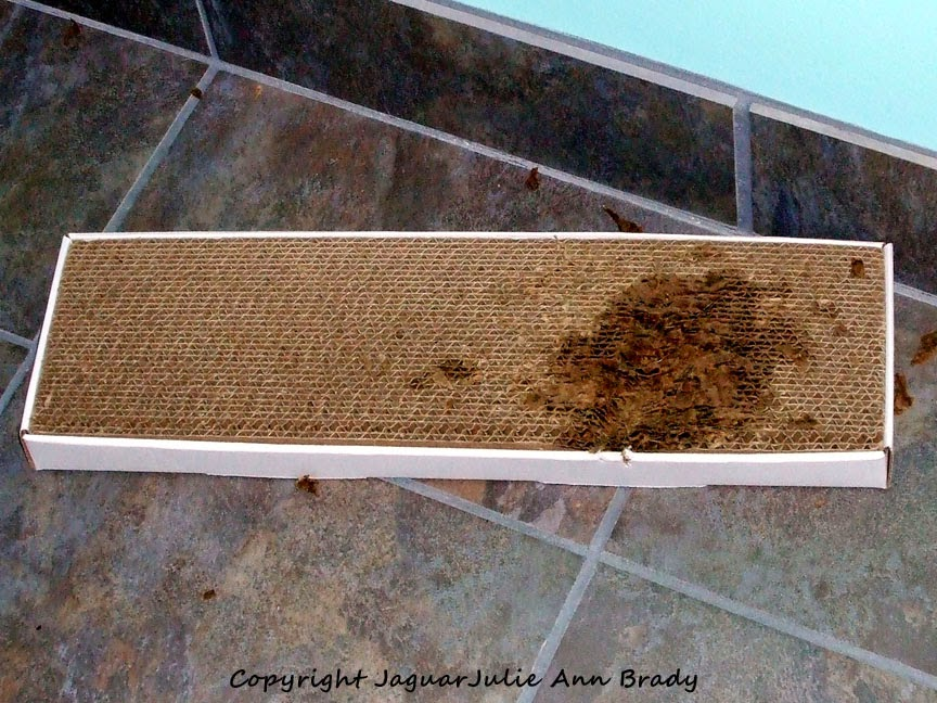 Pet Luv Cat Scratcher Board After Five Minutes of Use