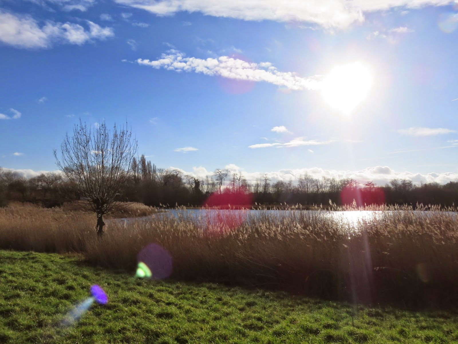 Wildfowl and Wetlands Trust London Sanctuary in January