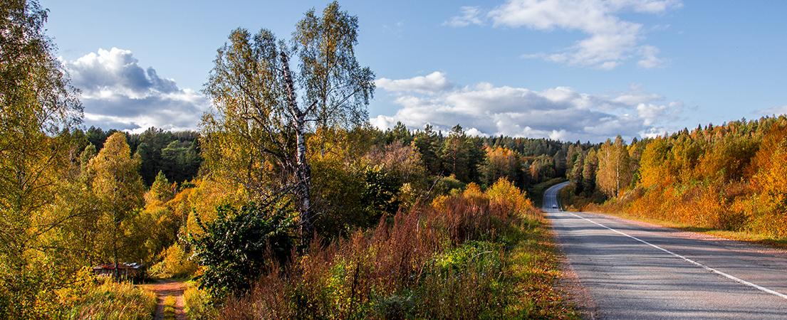 Осенний лес, Пермский край