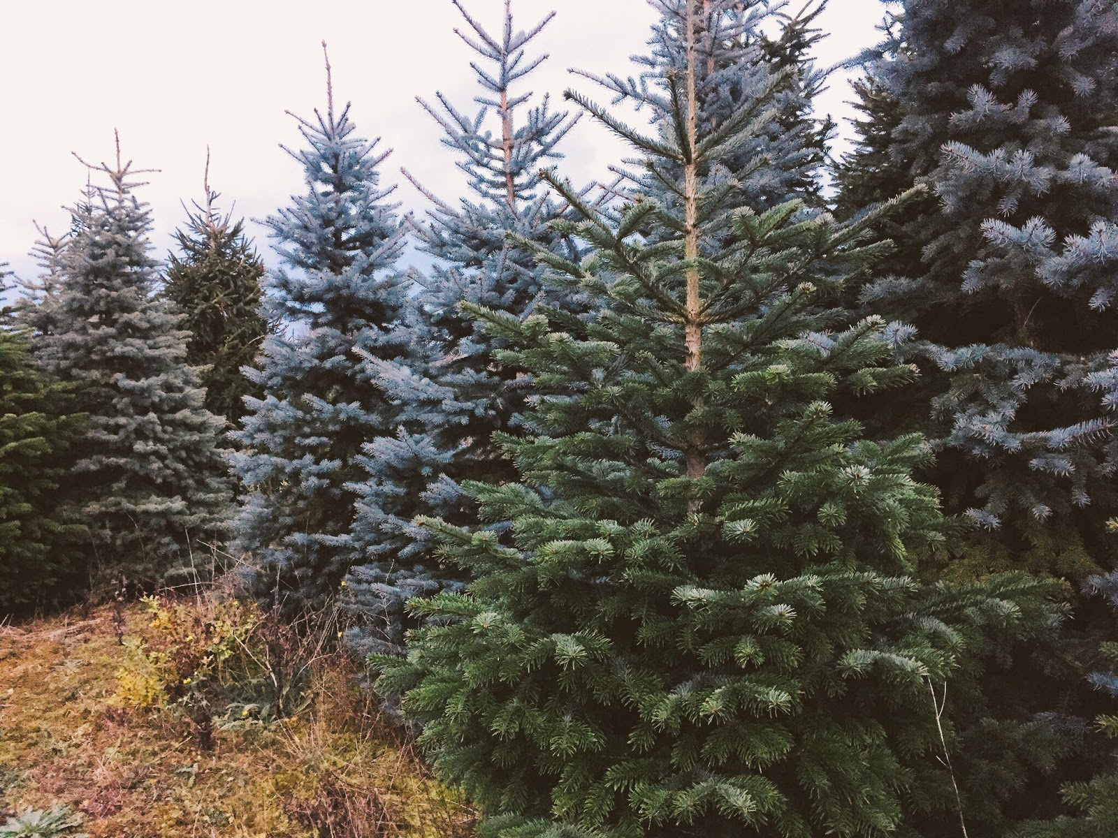 A Very Christmasy Day | Christmas Tree Shopping