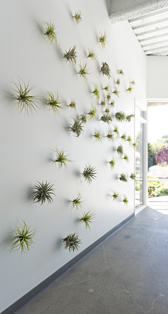 tillandsia luchtplant evernote silicon valley