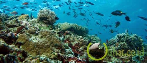 Taman Laut Bunaken – Sulawesi Utara