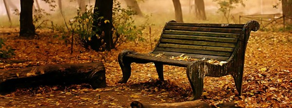 Nature Old Bench HD Cover Fb New