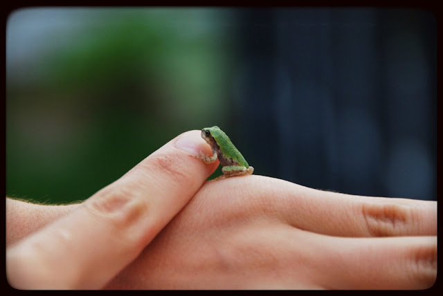 mini grenouille miniature jardin marguerite verte